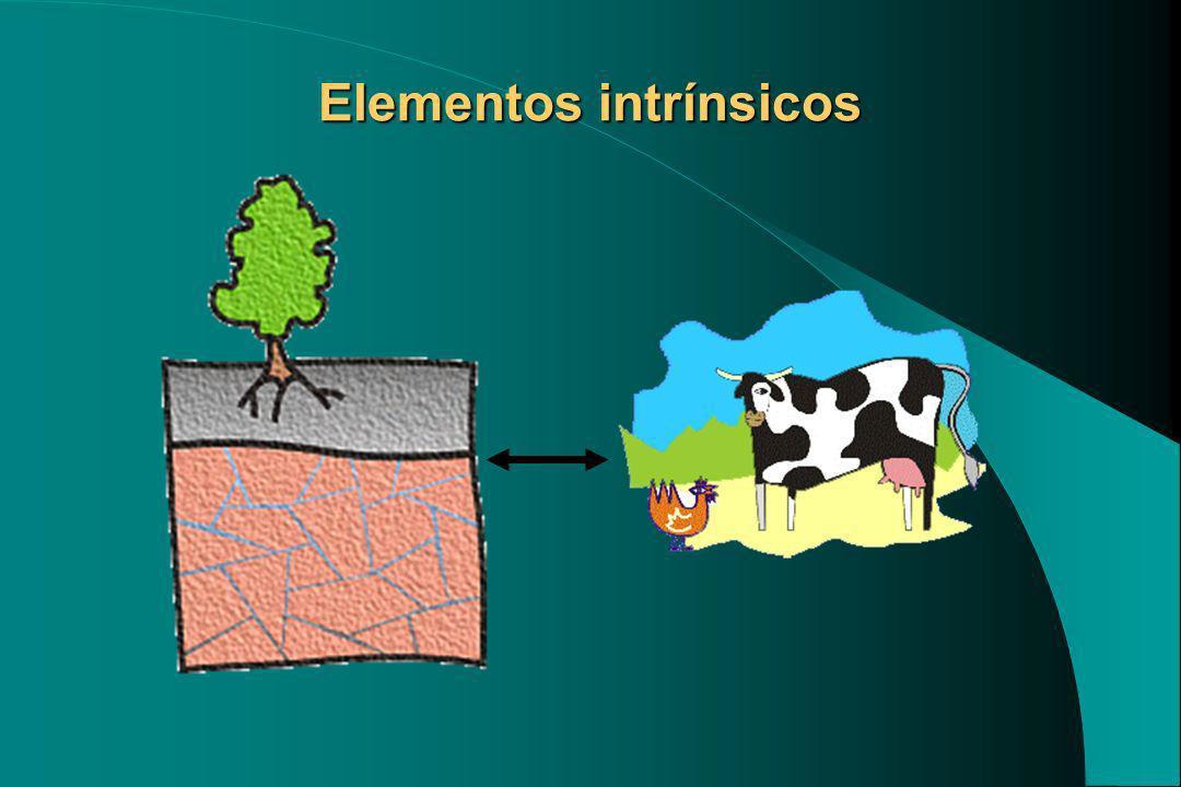 Elementos intrínsicos