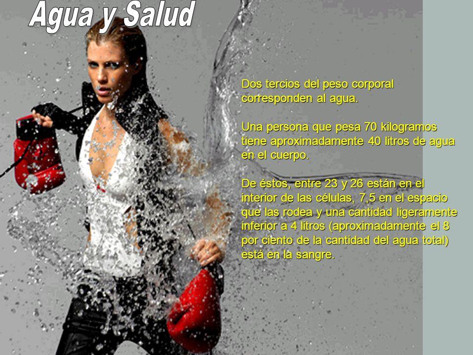 Este volumen de agua, relativamente pequeño en la sangre, es muy importante para el funcionamiento del cuerpo y debe mantenerse constante.