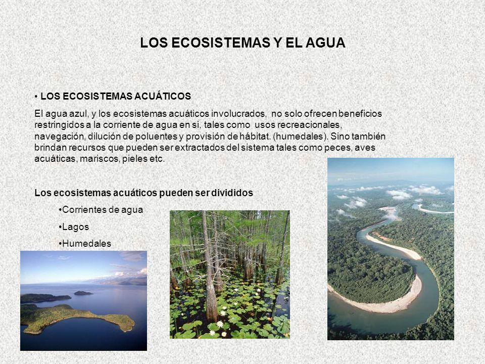 S10_HYDRO_CYCLE_Keith kennedy_CHYN Neuchatel_25 June 2003 21 E LOS ECOSISTEMAS Y EL AGUA LOS ECOSISTEMAS ACUÁTICOS El agua azul, y los ecosistemas acu