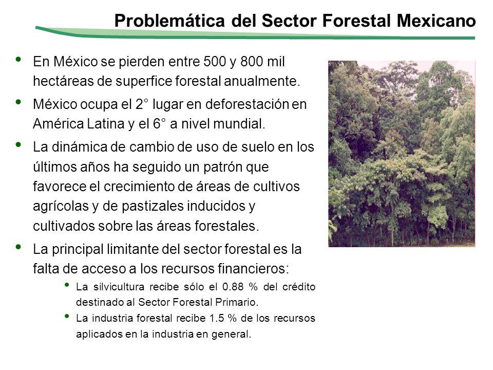 Problemática del Sector Forestal Mexicano En México se pierden entre 500 y 800 mil hectáreas de superfice forestal anualmente. México ocupa el 2° luga