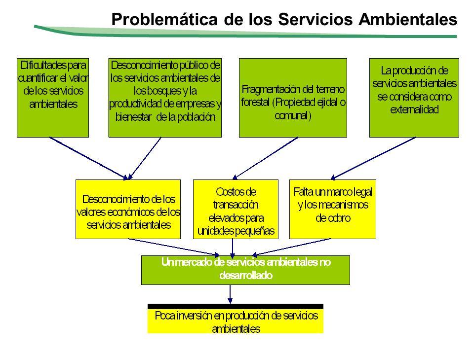 Fortalezas para el desarrollo de un mercado de Servicios Ambientales En México existe una gran superficie de los ecosistemas forestales (55.3 millones de ha.