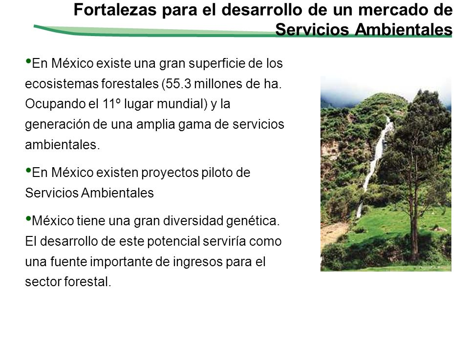 Fortalezas para el desarrollo de un mercado de Servicios Ambientales En México existe una gran superficie de los ecosistemas forestales (55.3 millones