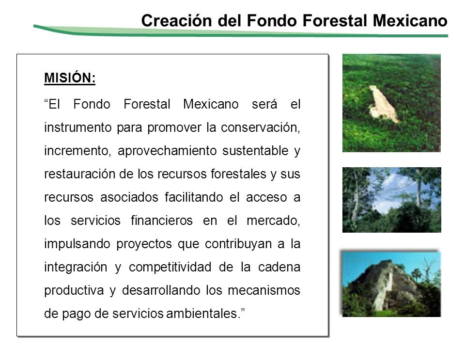 MISIÓN: El Fondo Forestal Mexicano será el instrumento para promover la conservación, incremento, aprovechamiento sustentable y restauración de los re