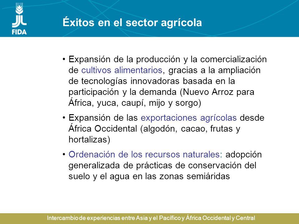 Intercambio de experiencias entre Asia y el Pacífico y África Occidental y Central Rendimientos cerealeros, 1961-2001 1961197119811991 FAOSTAT (2001) China Asia meridional África subsahariana 0 2 4 6 Toneladas por hectárea 2001