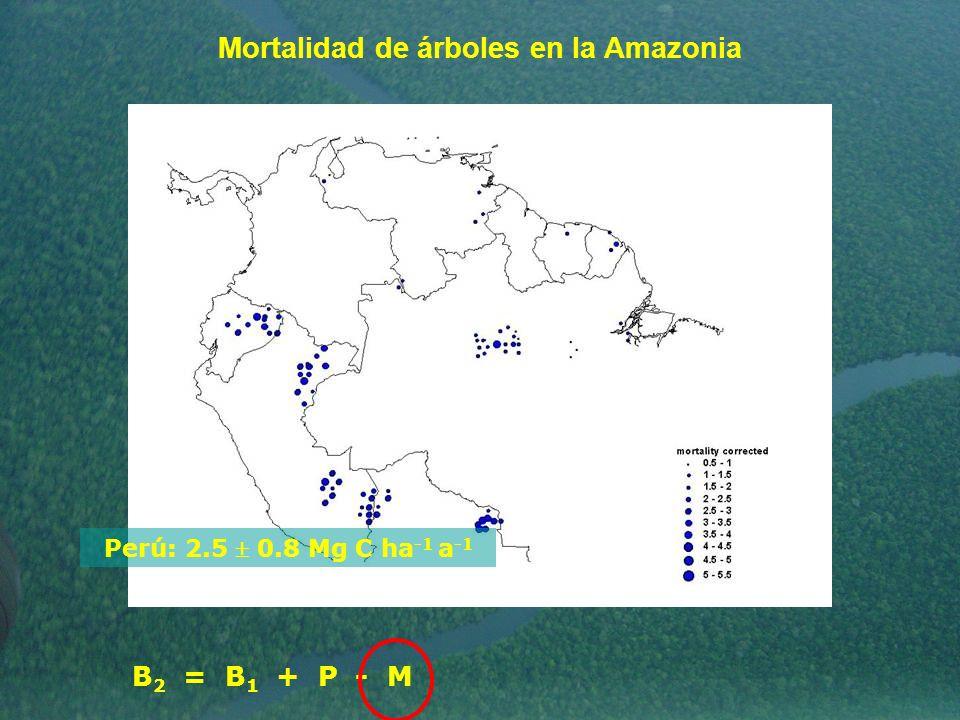 Mortalidad de árboles en la Amazonia Perú: 2.5 0.8 Mg C ha -1 a -1 B 2 = B 1 + P - M