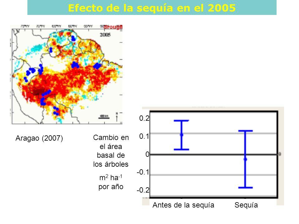 Antes de la sequía Sequía Cambio en el área basal de los árboles m 2 ha -1 por año 0.2 0.1 0 -0.1 -0.2 Efecto de la sequía en el 2005 Aragao (2007)