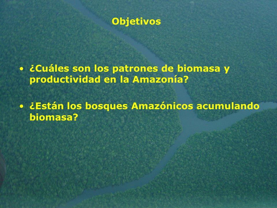 ¿Cuáles son los patrones de biomasa y productividad en la Amazonía? ¿Están los bosques Amazónicos acumulando biomasa? Objetivos
