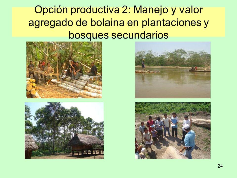 24 Opción productiva 2: Manejo y valor agregado de bolaina en plantaciones y bosques secundarios