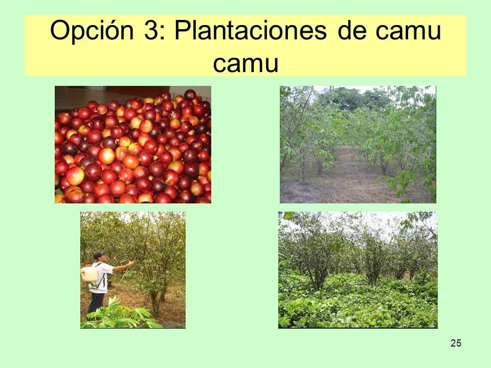 25 Opción 3: Plantaciones de camu camu