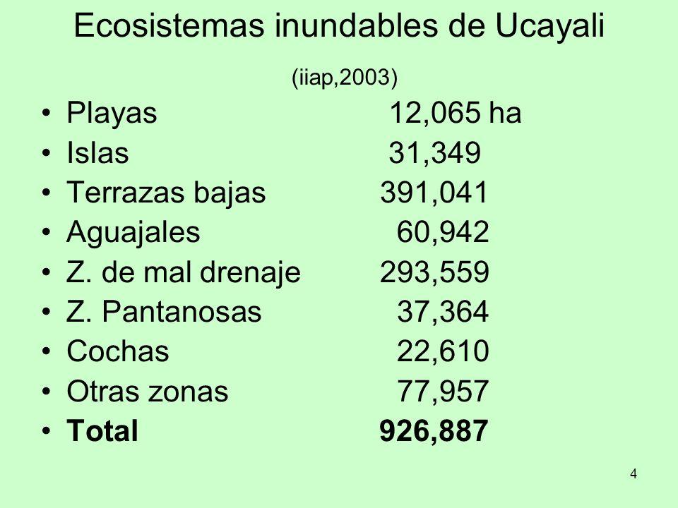 4 Ecosistemas inundables de Ucayali (iiap,2003) Playas 12,065 ha Islas 31,349 Terrazas bajas391,041 Aguajales 60,942 Z. de mal drenaje293,559 Z. Panta