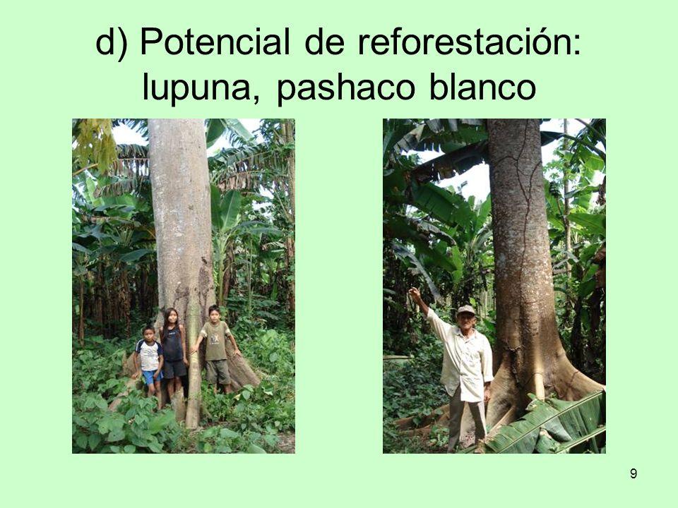10 e) Potencial agrícola: papaya, coco