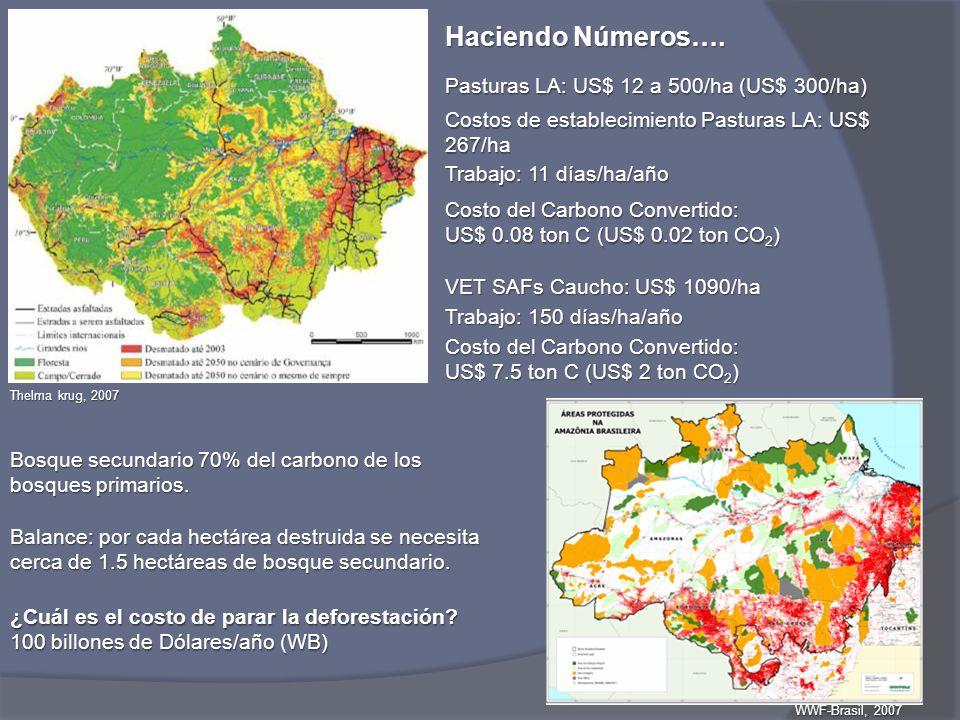 Thelma krug, 2007 VET SAFs Caucho: US$ 1090/ha Haciendo Números…. Trabajo: 150 días/ha/año Costo del Carbono Convertido: US$ 7.5 ton C (US$ 2 ton CO 2