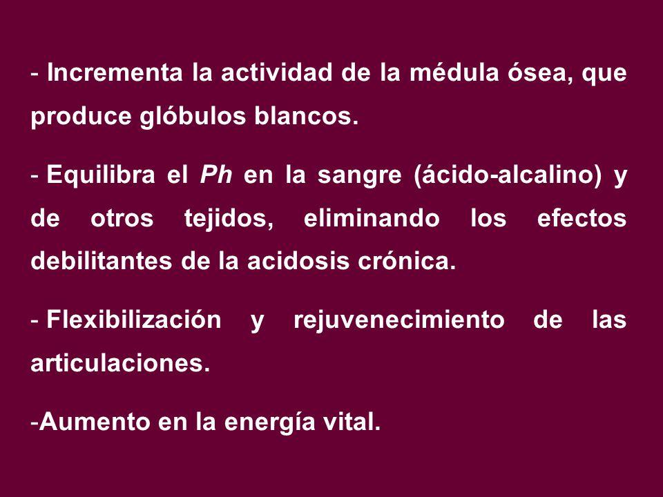 - Incrementa la actividad de la médula ósea, que produce glóbulos blancos.