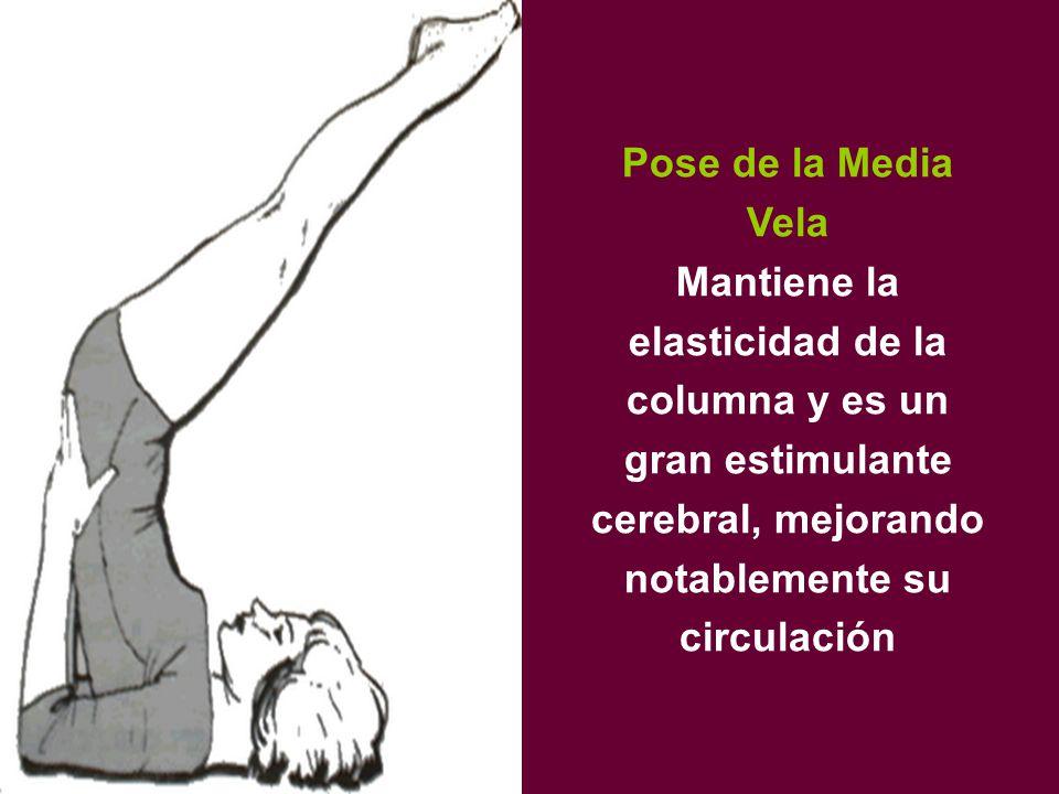 Pose de la Media Vela Mantiene la elasticidad de la columna y es un gran estimulante cerebral, mejorando notablemente su circulación