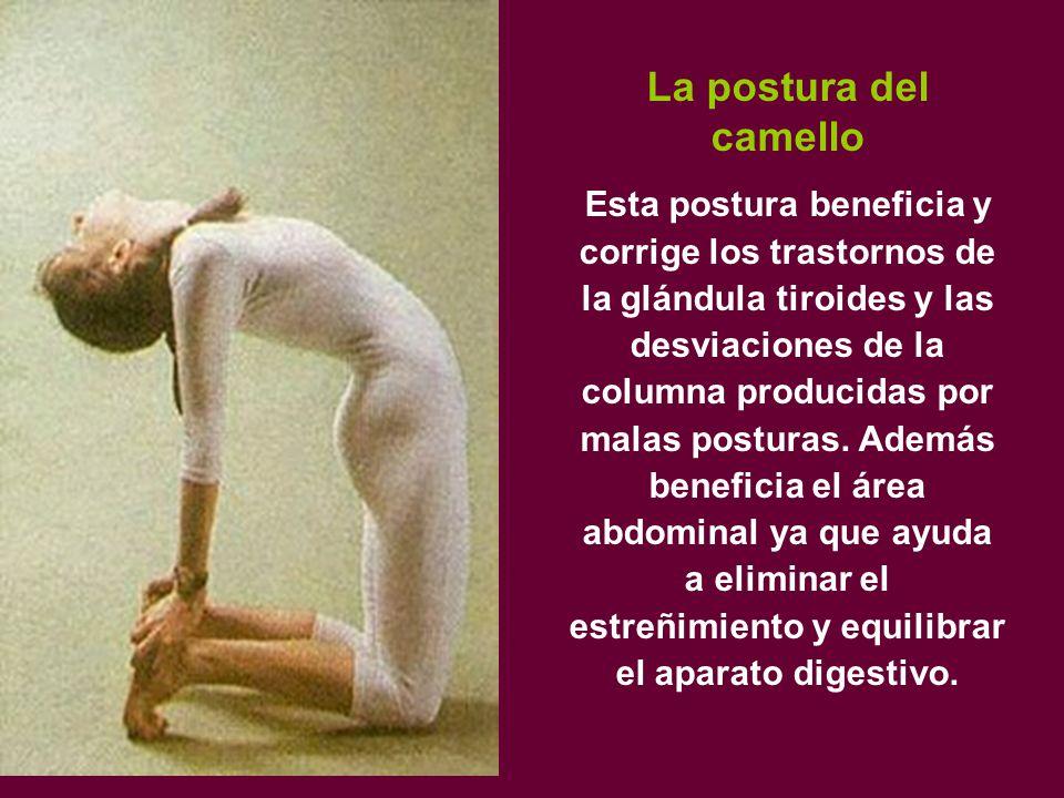 La postura del camello Esta postura beneficia y corrige los trastornos de la glándula tiroides y las desviaciones de la columna producidas por malas posturas.