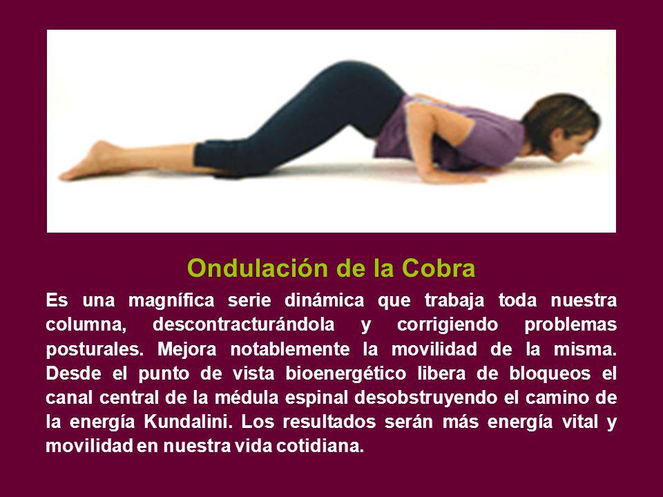 Ondulación de la Cobra Es una magnífica serie dinámica que trabaja toda nuestra columna, descontracturándola y corrigiendo problemas posturales.