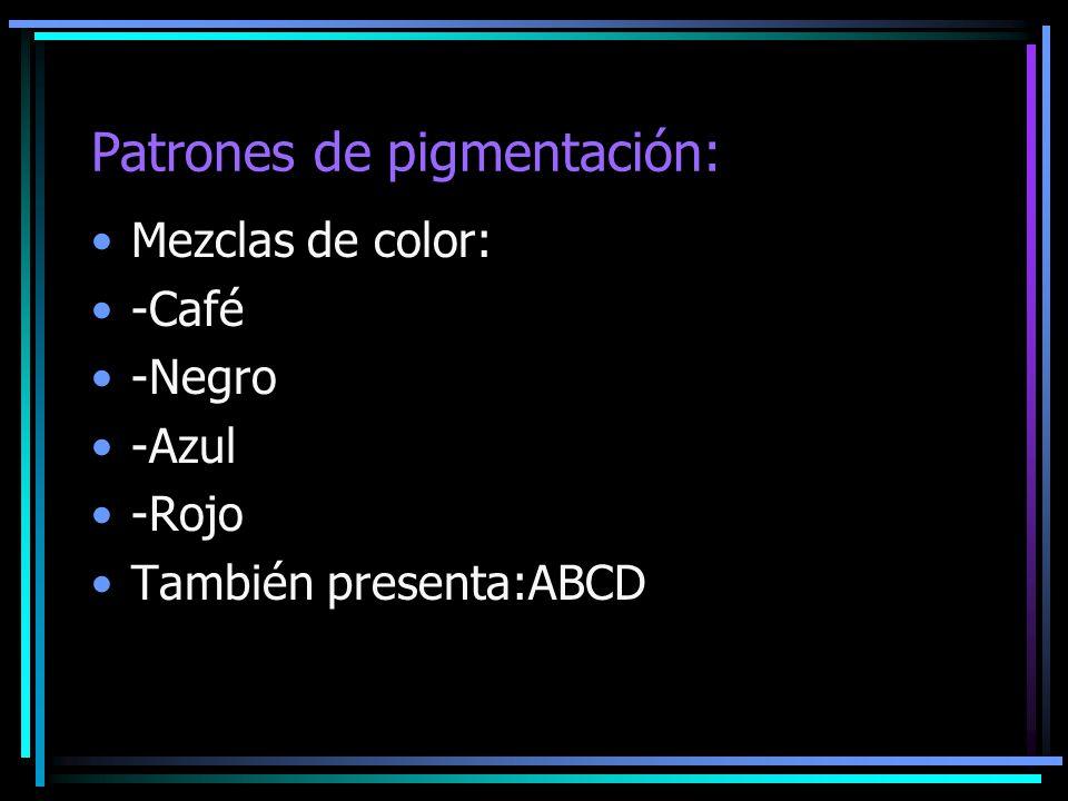 Patrones de pigmentación: Mezclas de color: -Café -Negro -Azul -Rojo También presenta:ABCD