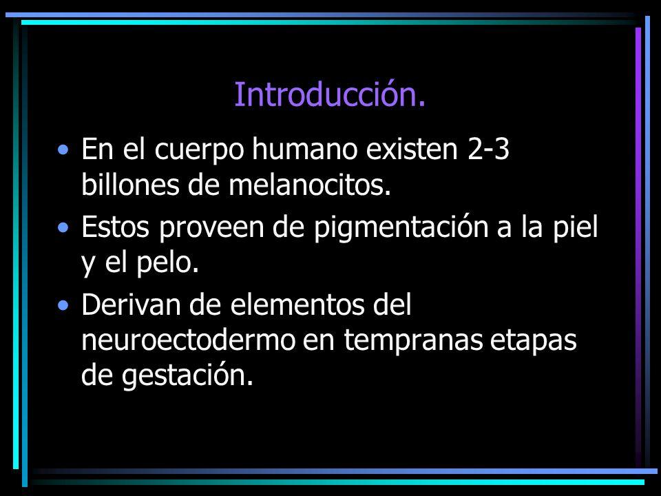 Introducción. En el cuerpo humano existen 2-3 billones de melanocitos. Estos proveen de pigmentación a la piel y el pelo. Derivan de elementos del neu