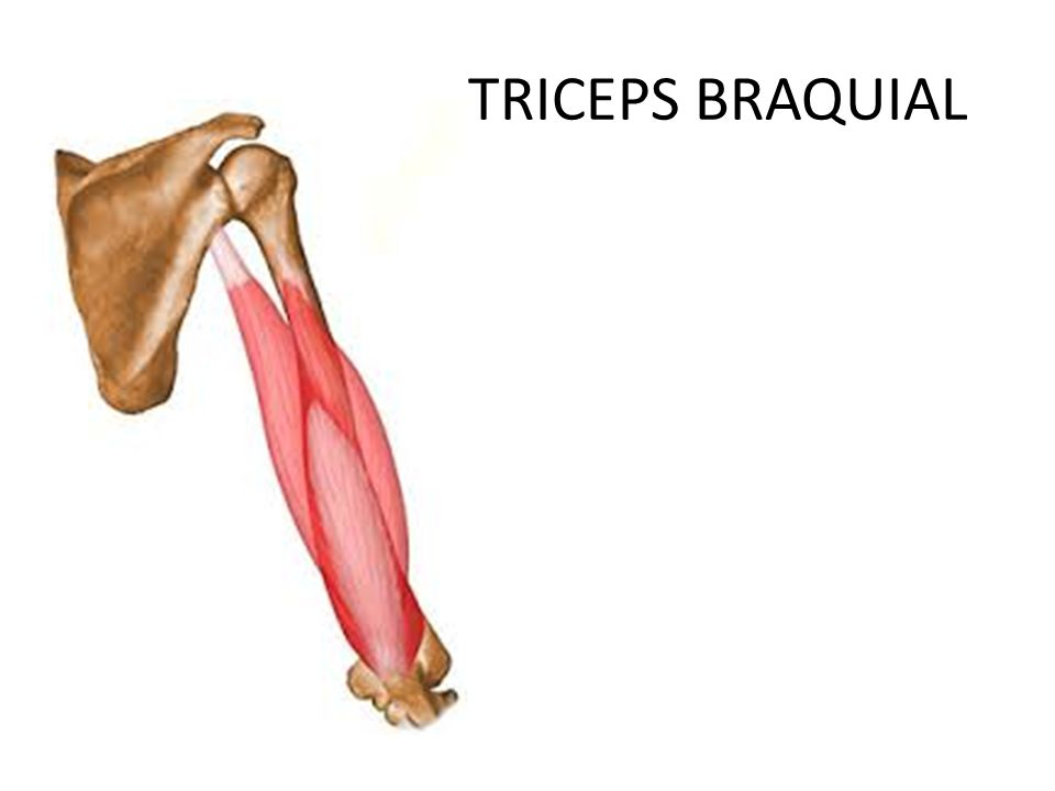 fisioterapia: TRICEPS BRAQUIAL