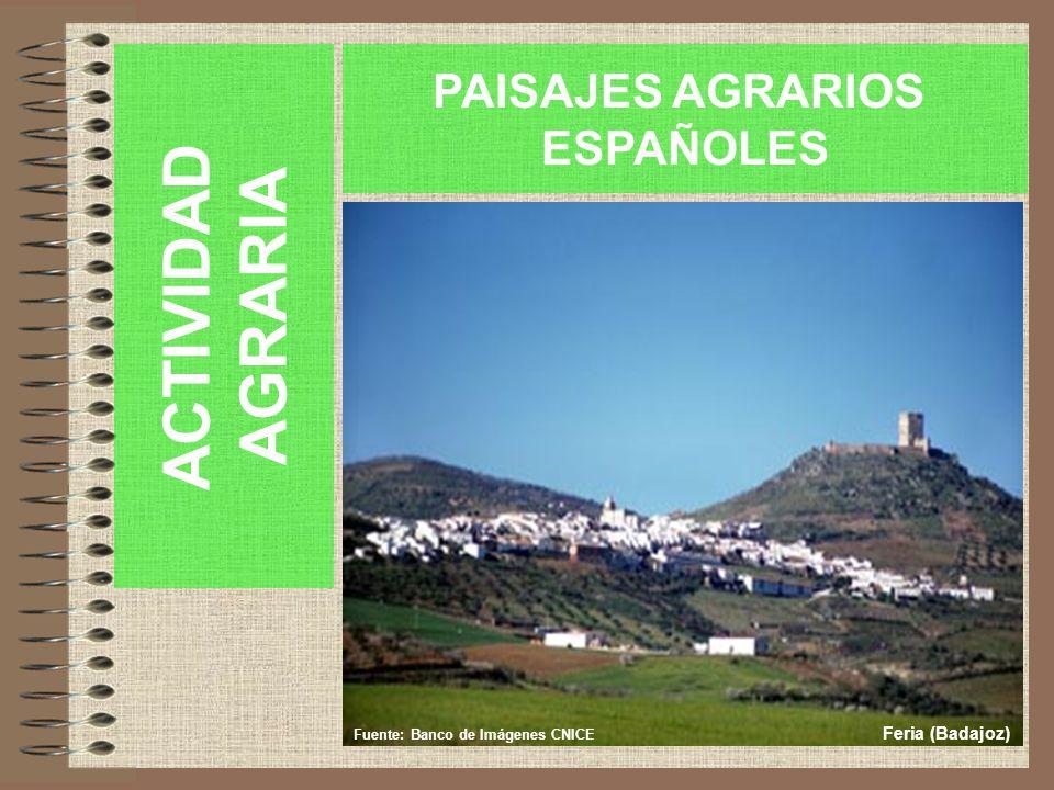 ACTIVIDAD AGRARIA PAISAJES AGRARIOS ESPAÑOLES Fuente: Banco de Imágenes CNICE Feria (Badajoz)