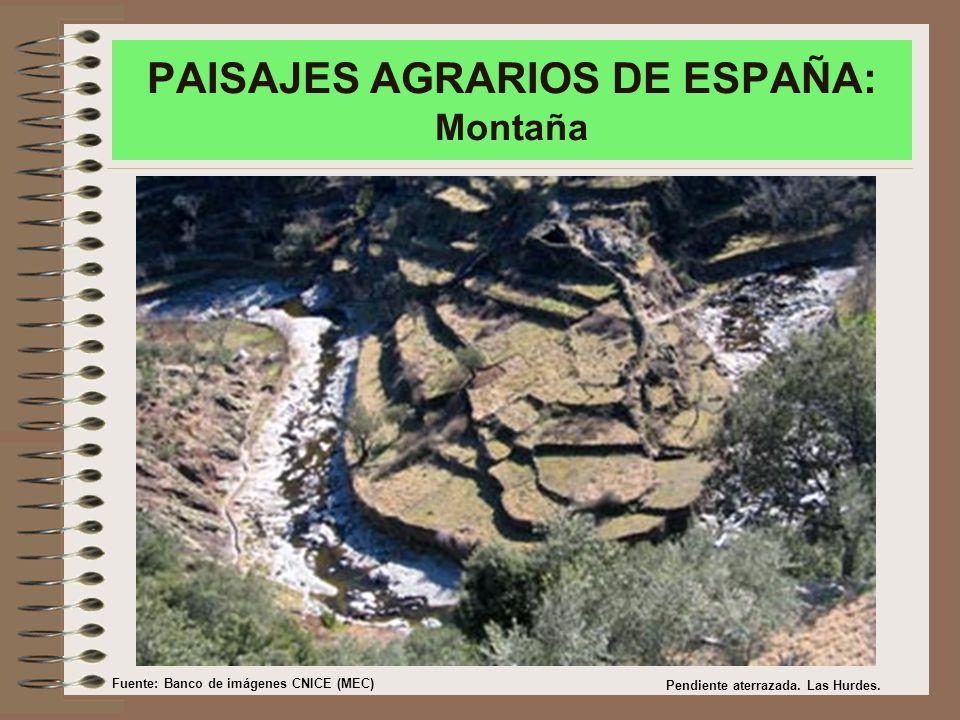 PAISAJES AGRARIOS DE ESPAÑA: Montaña Pendiente aterrazada.
