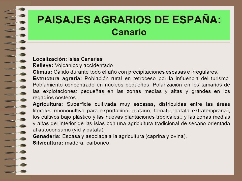 PAISAJES AGRARIOS DE ESPAÑA: Canario Localización: Islas Canarias Relieve: Volcánico y accidentado.