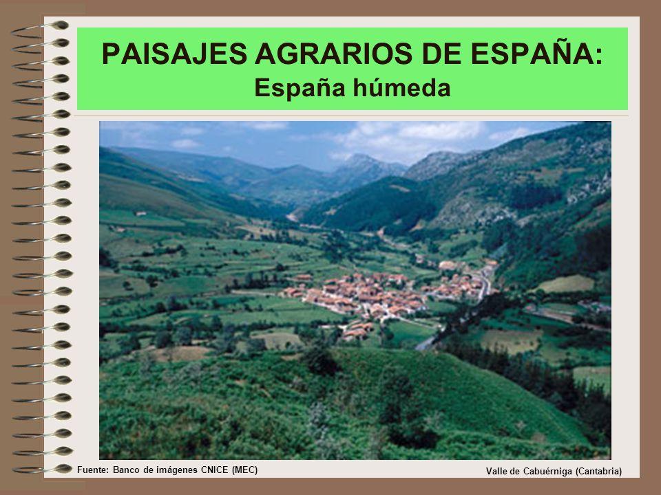 PAISAJES AGRARIOS DE ESPAÑA: España húmeda Valle de Cabuérniga (Cantabria) Fuente: Banco de imágenes CNICE (MEC)