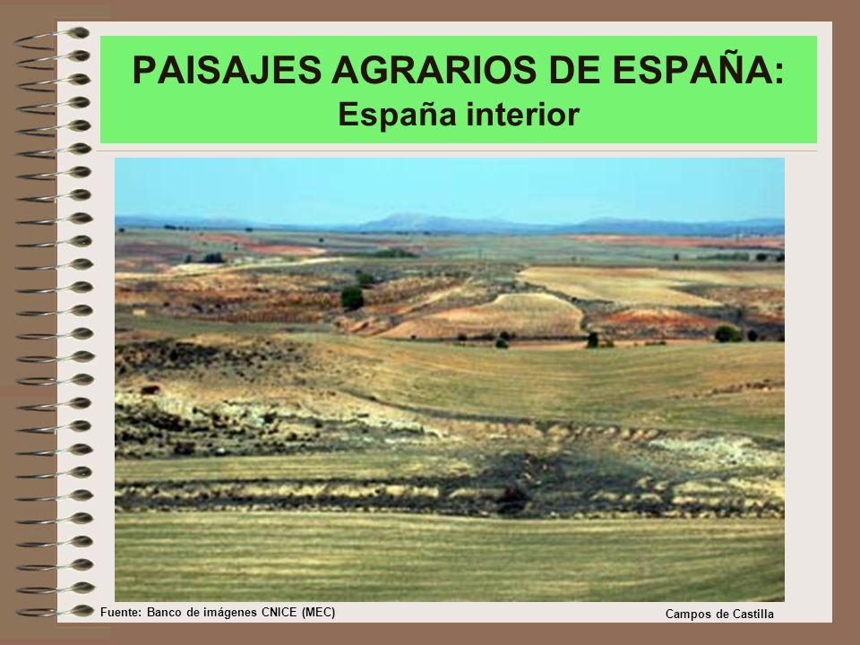 PAISAJES AGRARIOS DE ESPAÑA: España interior Campos de Castilla Fuente: Banco de imágenes CNICE (MEC)