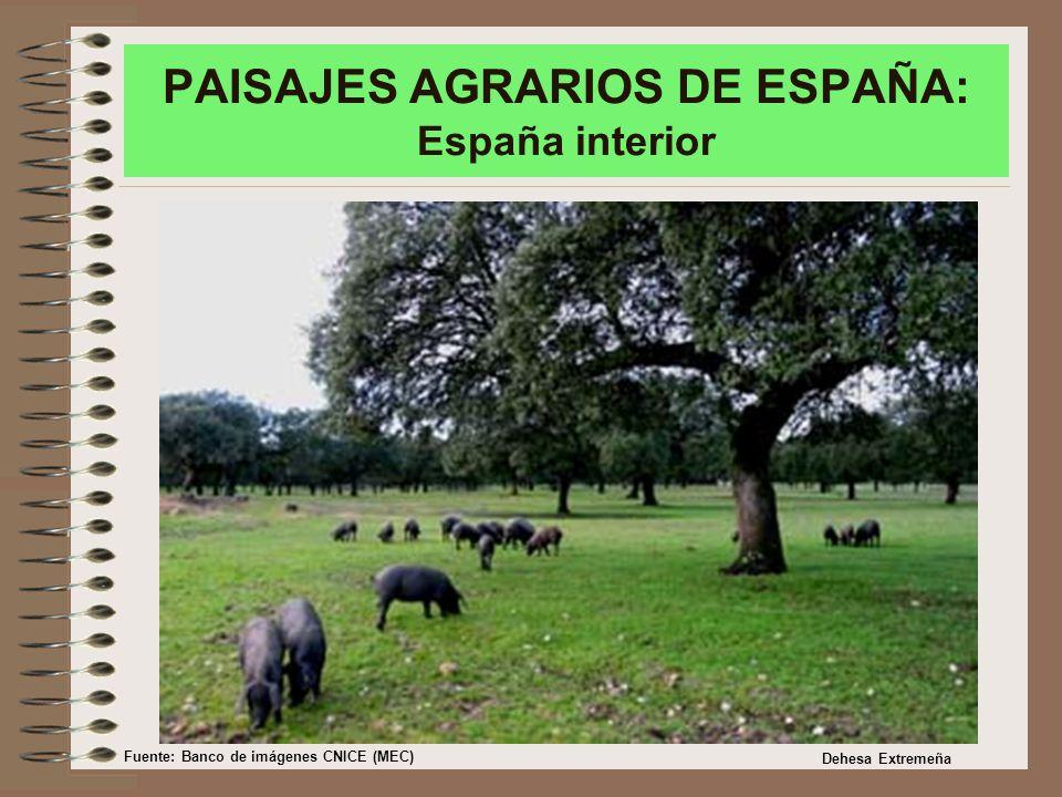 PAISAJES AGRARIOS DE ESPAÑA: España interior Dehesa Extremeña Fuente: Banco de imágenes CNICE (MEC)