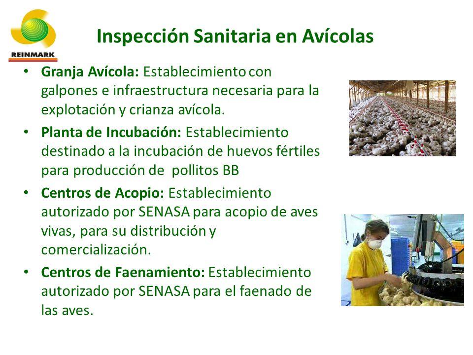 Granja Avícola: Establecimiento con galpones e infraestructura necesaria para la explotación y crianza avícola.