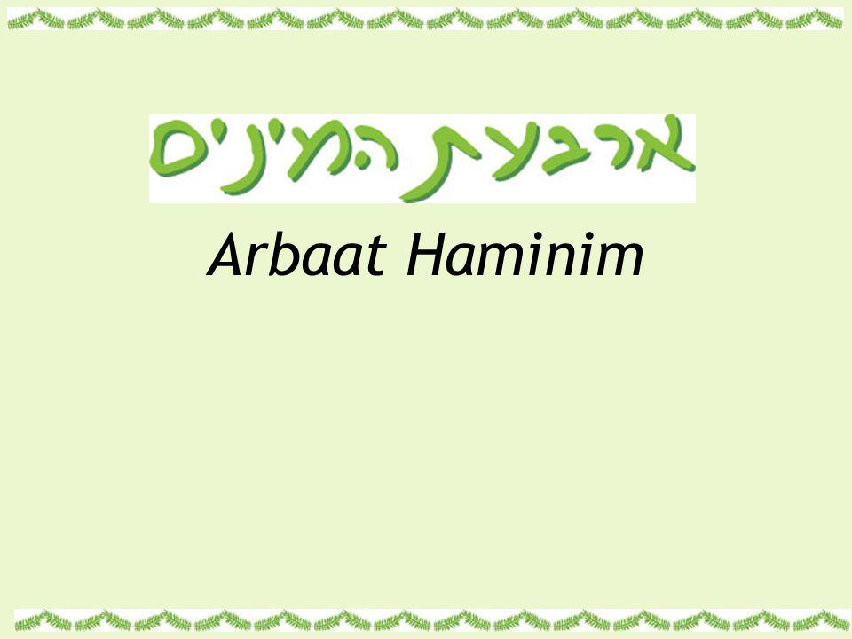 Arbaat Haminim