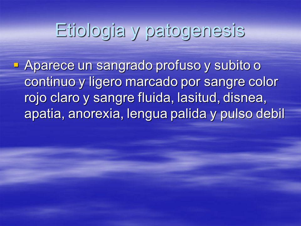 Etiologia y patogenesis  Aparece un sangrado profuso y subito o continuo y ligero marcado por sangre color rojo claro y sangre fluida, lasitud, disnea, apatia, anorexia, lengua palida y pulso debil