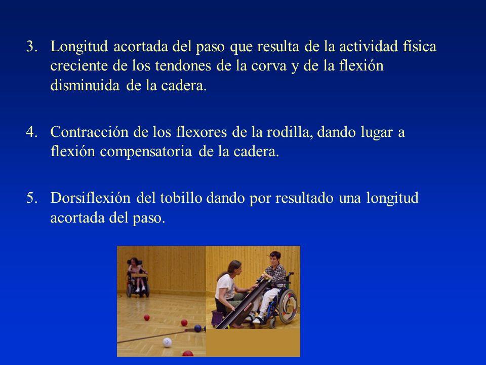 3.Longitud acortada del paso que resulta de la actividad física creciente de los tendones de la corva y de la flexión disminuida de la cadera.