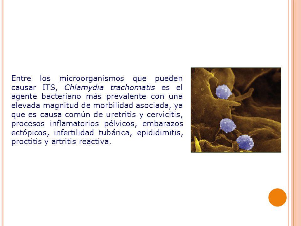 Entre los microorganismos que pueden causar ITS, Chlamydia trachomatis es el agente bacteriano más prevalente con una elevada magnitud de morbilidad asociada, ya que es causa común de uretritis y cervicitis, procesos inflamatorios pélvicos, embarazos ectópicos, infertilidad tubárica, epididimitis, proctitis y artritis reactiva.