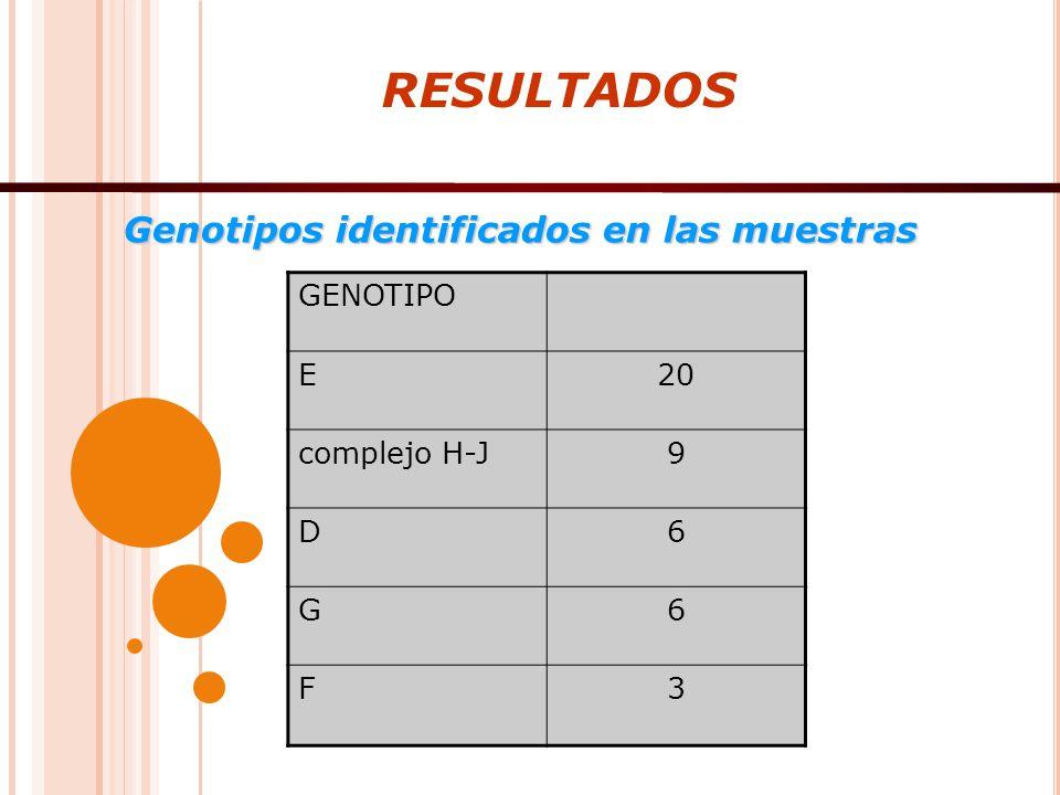 RESULTADOS Genotipos identificados en las muestras GENOTIPO E20 complejo H-J9 D6 G6 F3
