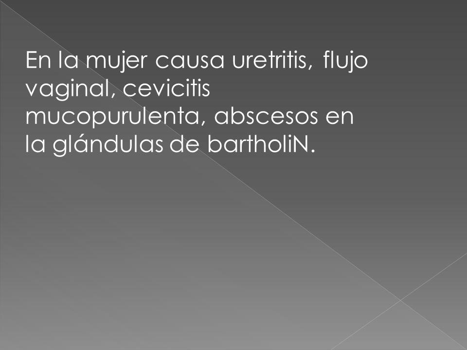 En la mujer causa uretritis, flujo vaginal, cevicitis mucopurulenta, abscesos en la glándulas de bartholiN.