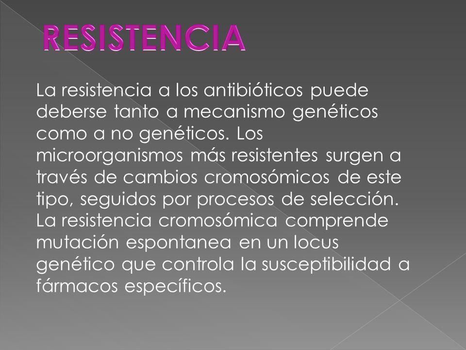 La resistencia a los antibióticos puede deberse tanto a mecanismo genéticos como a no genéticos.