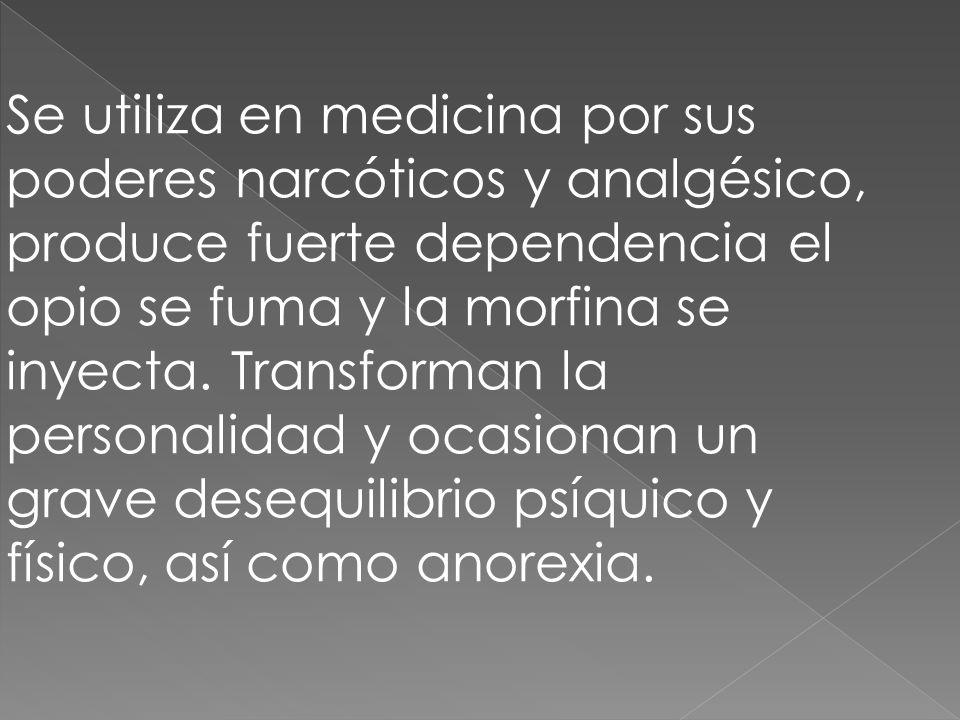 Se utiliza en medicina por sus poderes narcóticos y analgésico, produce fuerte dependencia el opio se fuma y la morfina se inyecta.