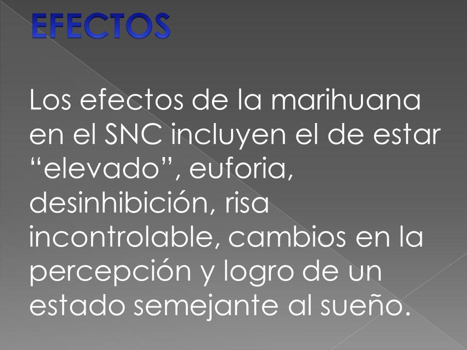 Los efectos de la marihuana en el SNC incluyen el de estar elevado , euforia, desinhibición, risa incontrolable, cambios en la percepción y logro de un estado semejante al sueño.