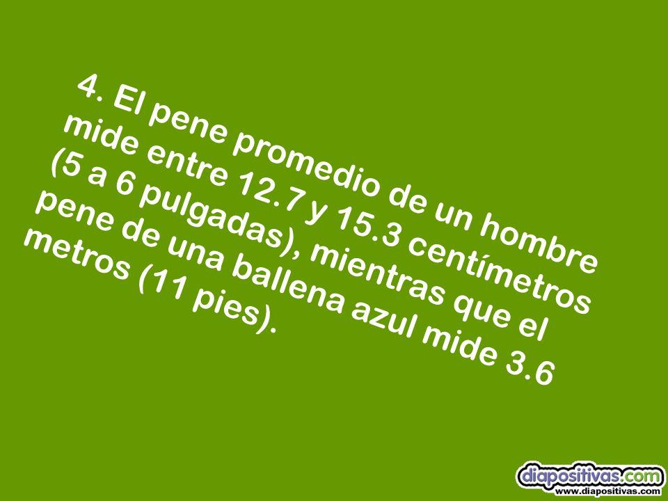 3. Durante la eyaculación el semen alcanza una velocidad de 45 kilómetros por hora (28 mi/h).