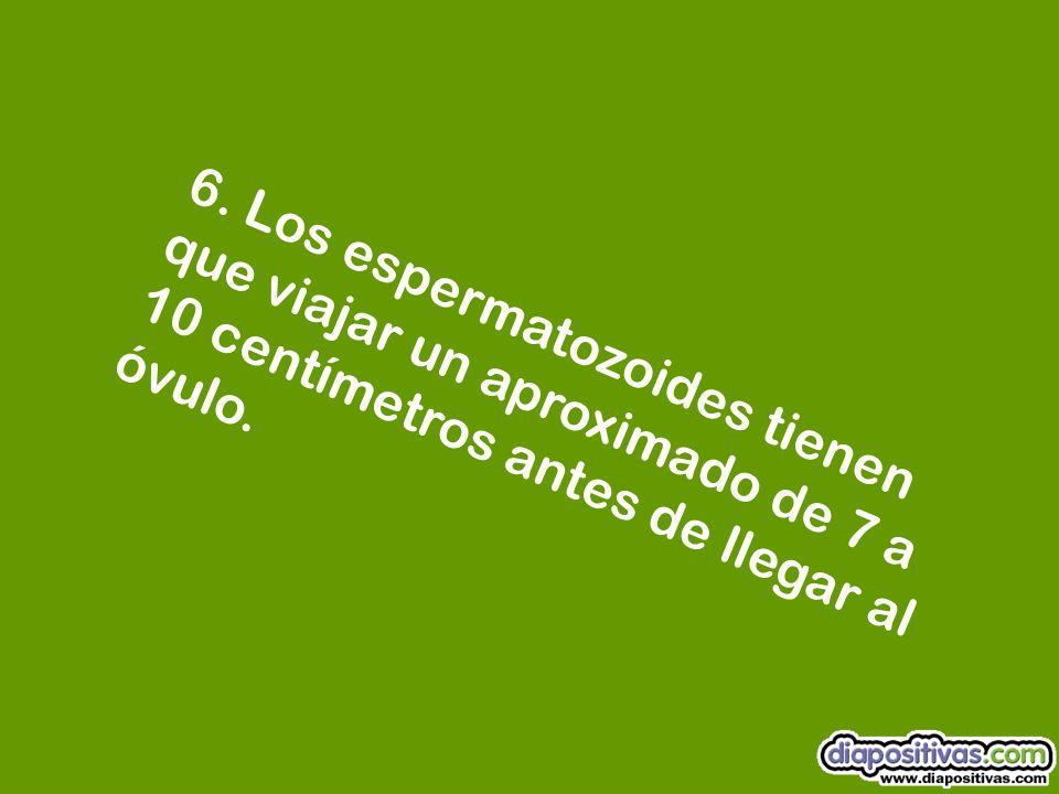 5. El hombre tiene un promedio de 11 erecciones durante el día, y durante la noche, unas 9.