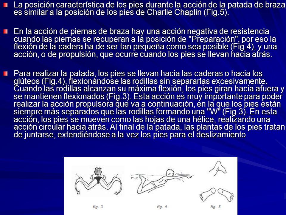 La posición característica de los pies durante la acción de la patada de braza es similar a la posición de los pies de Charlie Chaplin (Fig.5). En la