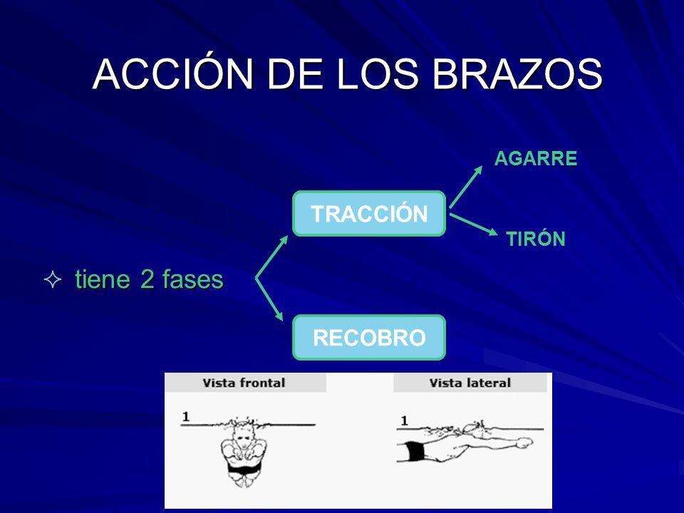 ACCIÓN DE LOS BRAZOS  tiene 2 fases TRACCIÓN RECOBRO AGARRE TIRÓN