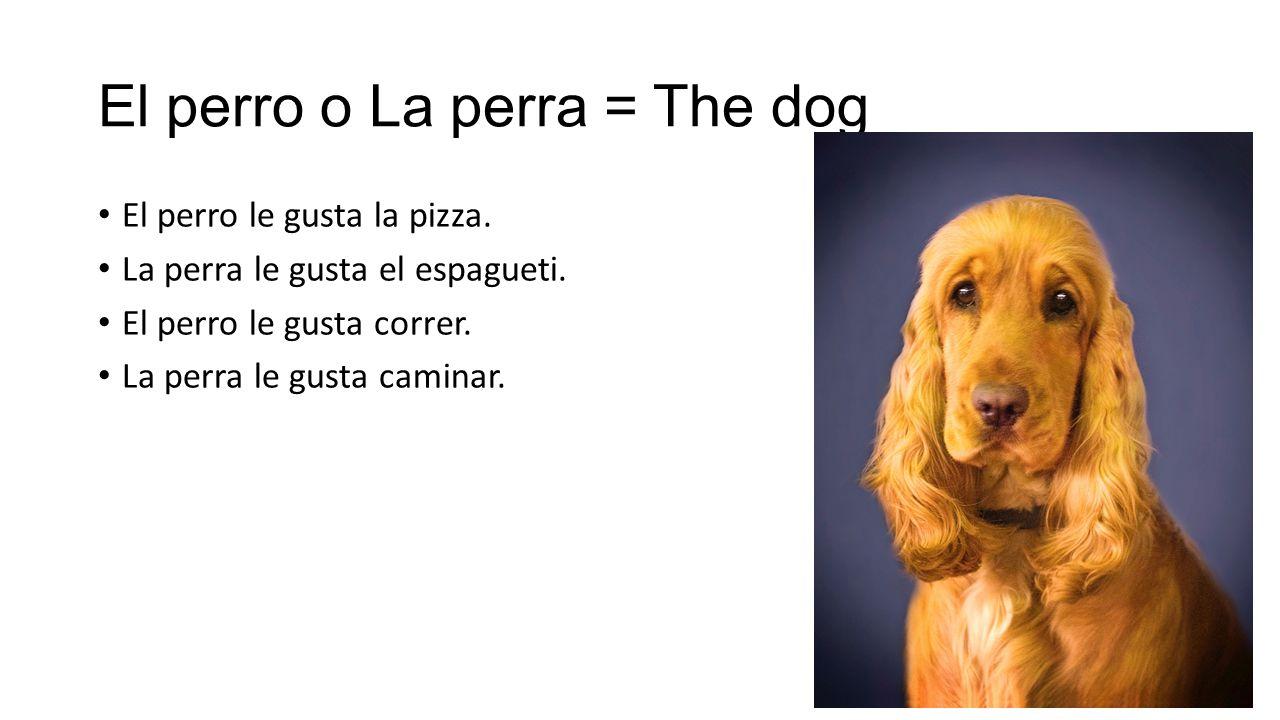El perro o La perra = The dog El perro le gusta la pizza.