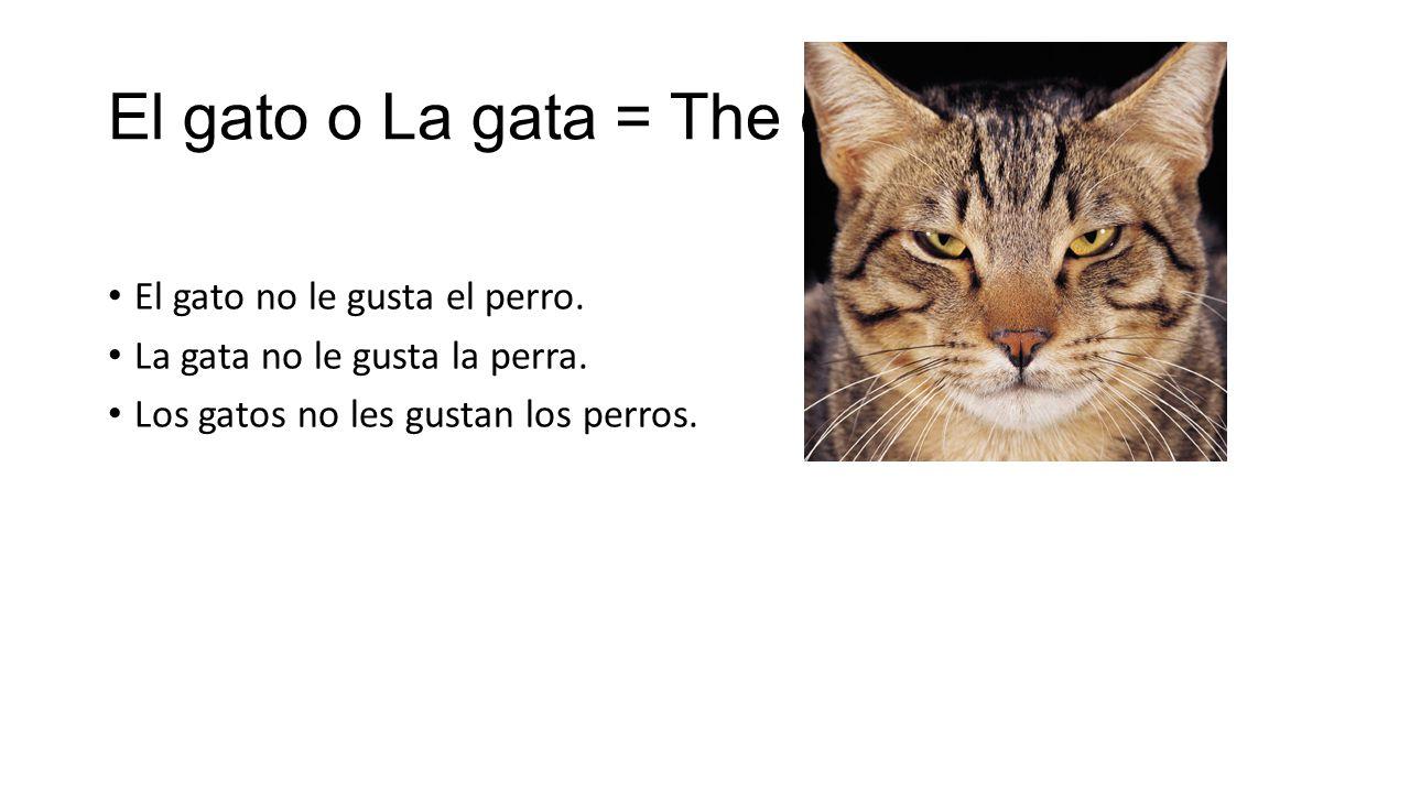 El gato o La gata = The cat El gato no le gusta el perro.
