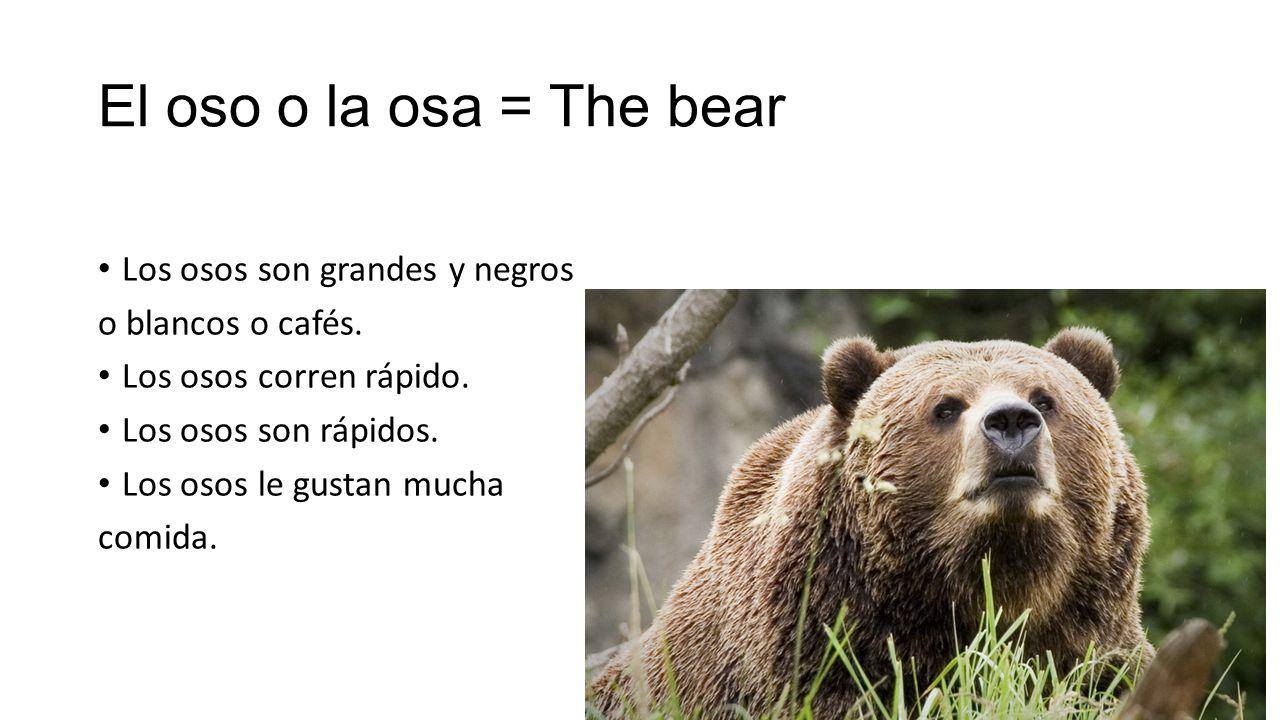 El oso o la osa = The bear Los osos son grandes y negros o blancos o cafés.