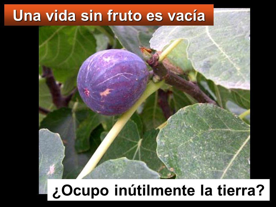 Y les dijo esta parábola: Uno tenía una higuera plantada en su viña, y fue a buscar fruto en ella, y no lo encontró.