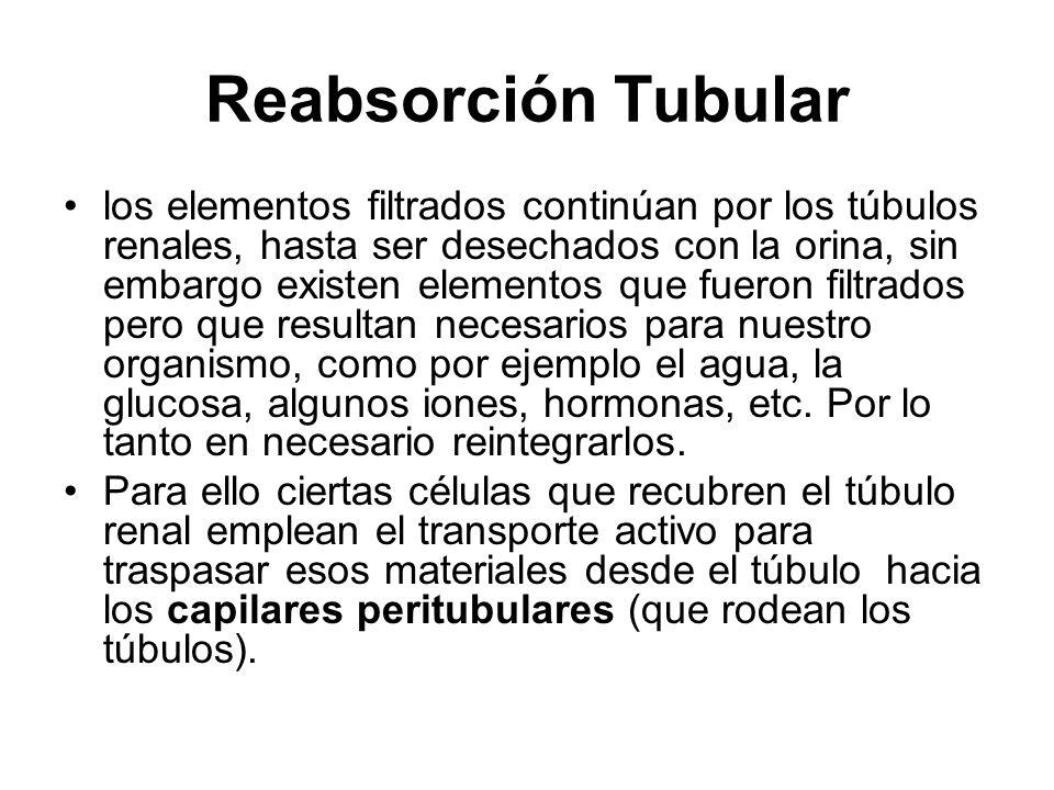 Reabsorción Tubular los elementos filtrados continúan por los túbulos renales, hasta ser desechados con la orina, sin embargo existen elementos que fu