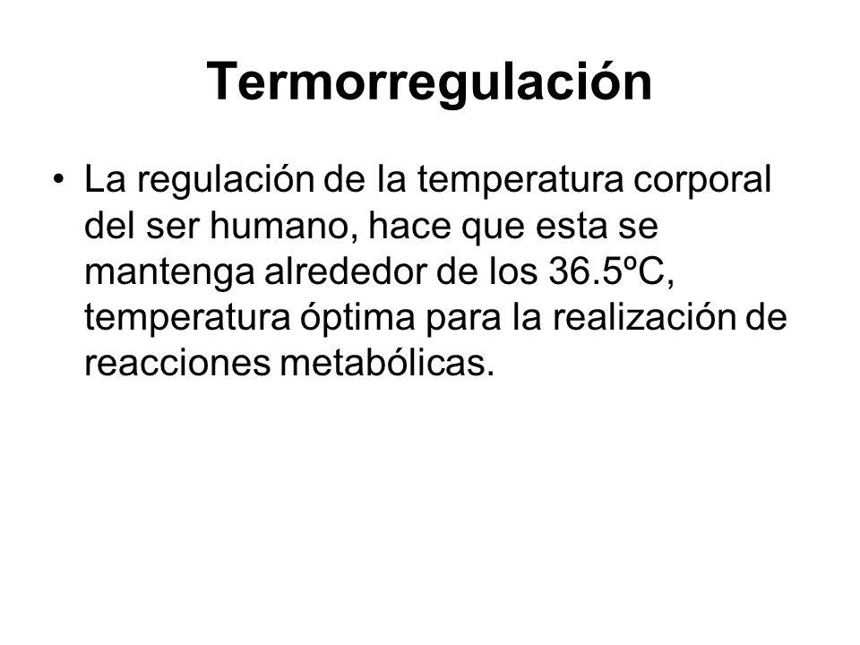 Termorregulación La regulación de la temperatura corporal del ser humano, hace que esta se mantenga alrededor de los 36.5ºC, temperatura óptima para l