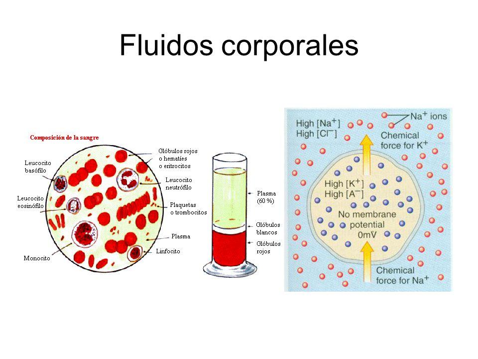 Equilibrio osmótico en animales terrestres La producción de ácido úrico y urea son dos adaptaciones importantes de los animales terrestres para excretar desechos nitrogenados con una mínima pérdida de agua